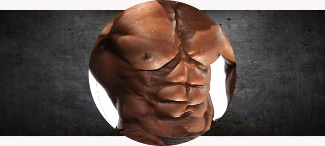 Анатомия и физиология мышц грудной клетки