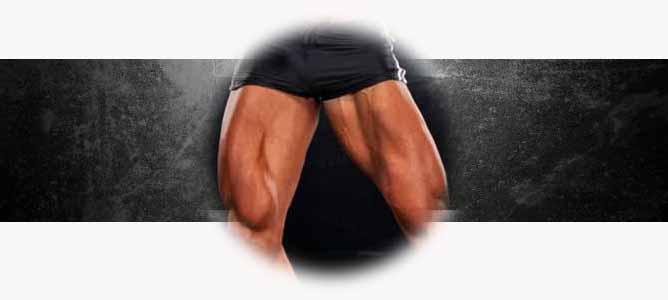 Анатомия и строение мышцы ног человека