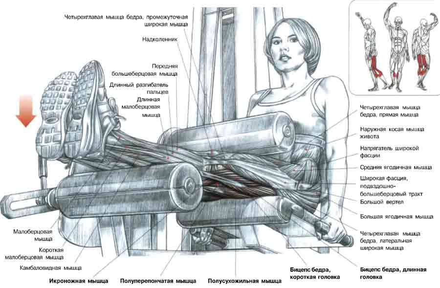 Какие мышцы задействуются