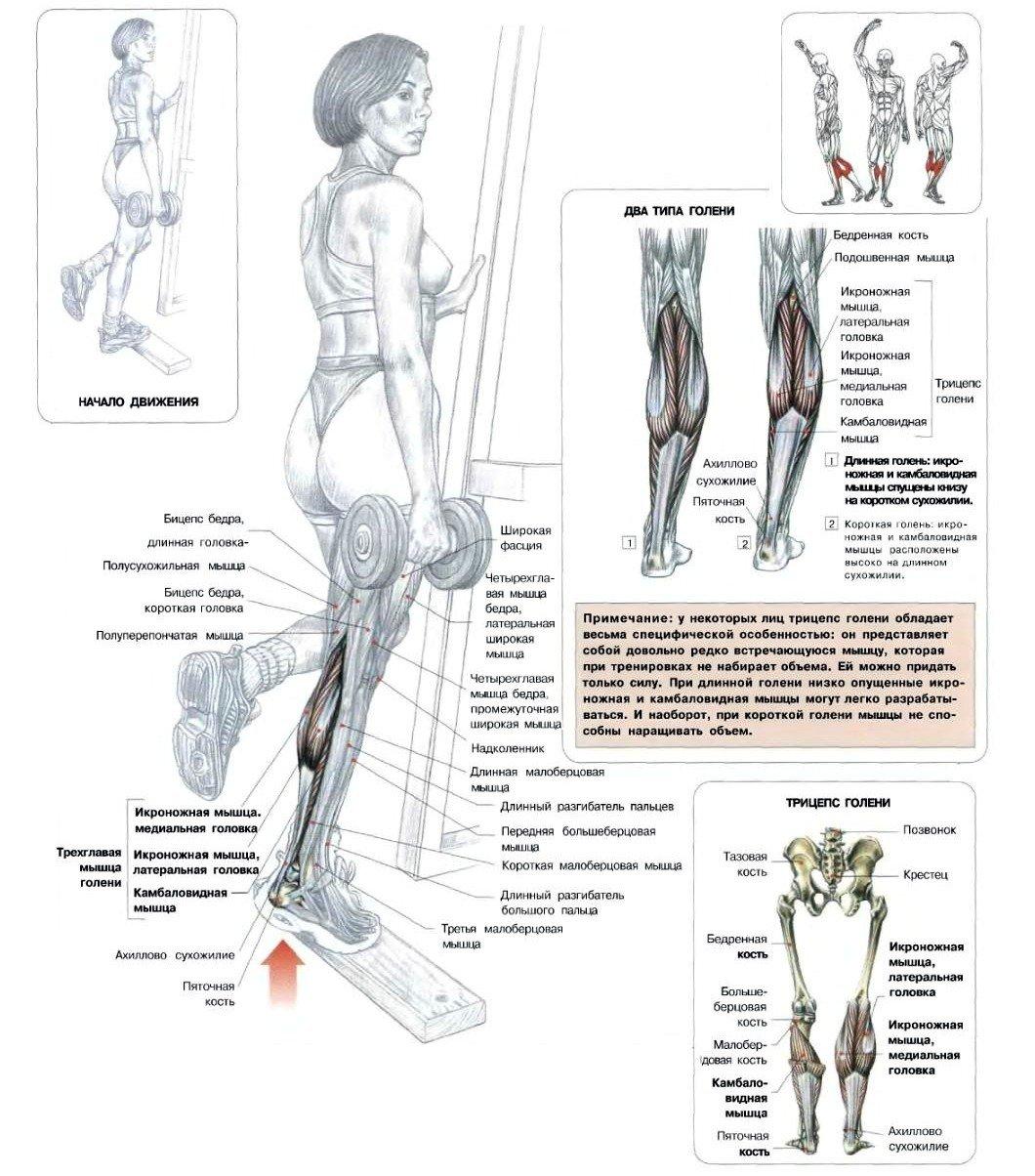 Подъем на носки: техника и секреты упражнения