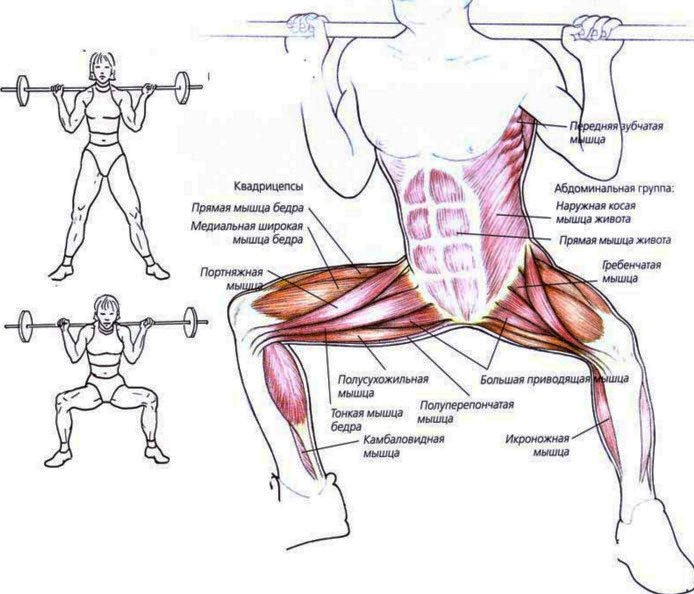 Приседания плие: какие мышцы работают