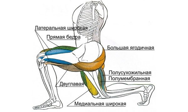 Какие мышцы задействованы