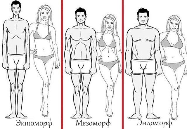 телосложение