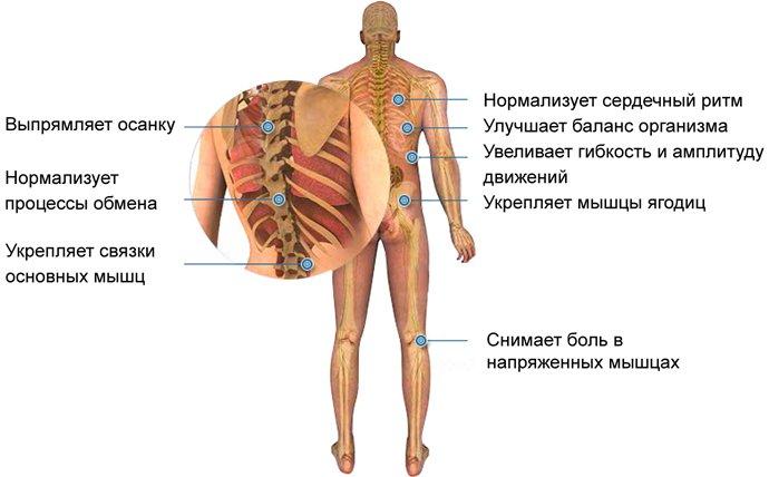 хулахуп мышцы