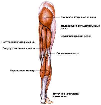 ходьба какие мышцы работают