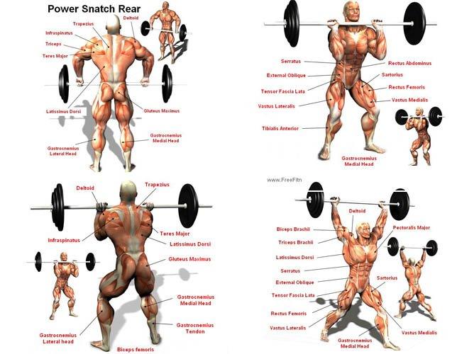 Польза и какие мышцы работают
