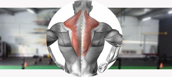 как накачать трапециевидную мышцу