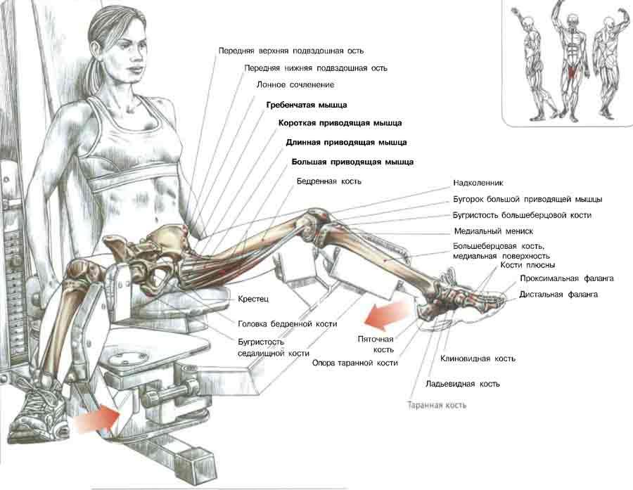 Разведение ног в тренажере: какие мышцы работают