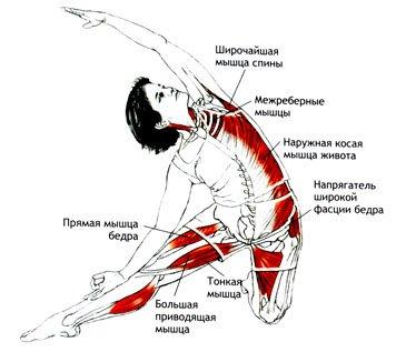 Паригхасана (Поза Засова) в йоге: техника, значение и польза