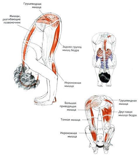Уттанасана акие мышцы работают