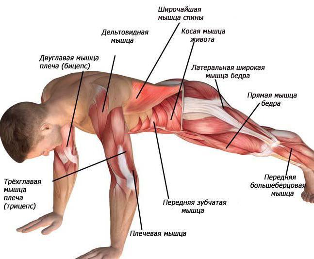 Упражнение «Скалолаз»: группы мышц