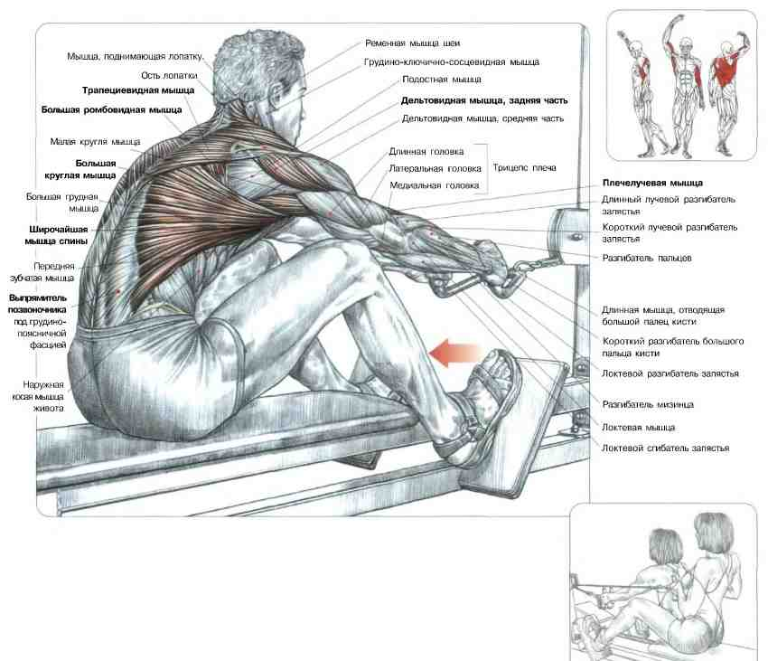 Какие мышцы работают