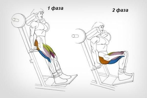 Работа мышц