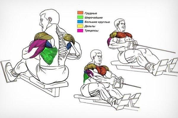 Мышцы при горизонтальной тяге